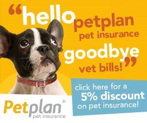 Pet plan banner 300x250 - Pet-plan-banner