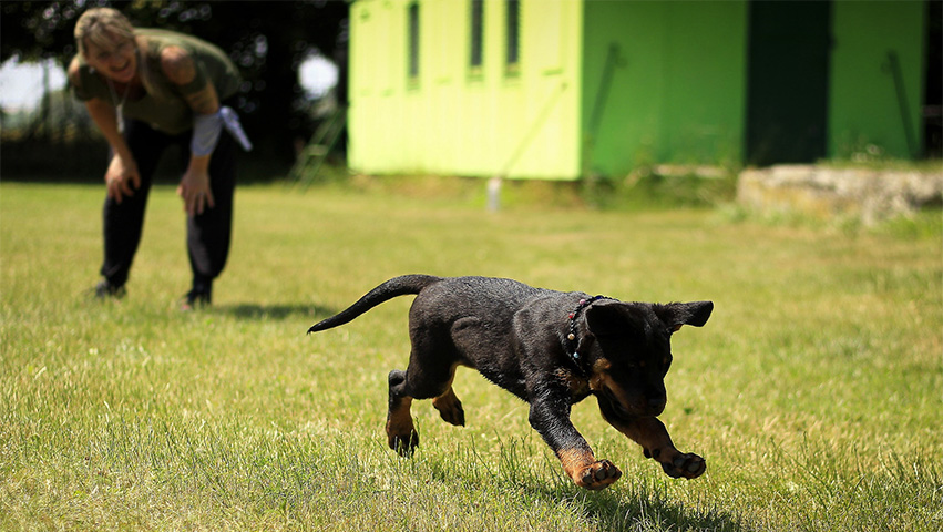 black dog - 2 Reasons Why Positive Reinforcement is Good for Dogs
