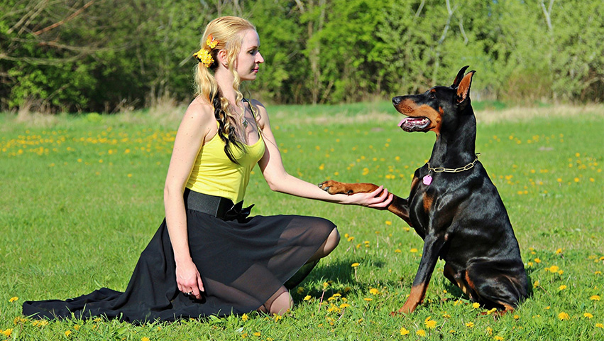 communication - 2 Reasons Why Positive Reinforcement is Good for Dogs