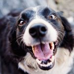 3 Human Foods Good for Dog Training Treats