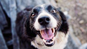 dog pet 300x169 - dog-pet