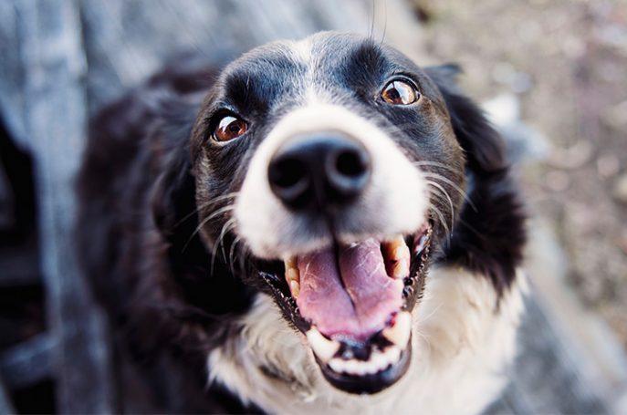 dog pet 687x455 - 3 Human Foods Good for Dog Training Treats