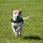2 Reasons Why Positive Reinforcement is Good for Dogs