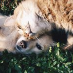 3 Tricks to Get Your Cats and Dogs to Get Along