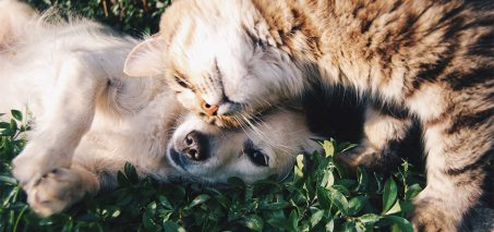 dogcat 453x213 - 3 Tricks to Get Your Cats and Dogs to Get Along